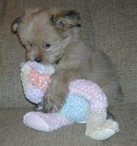Lindsayrobertsonlovespuppies
